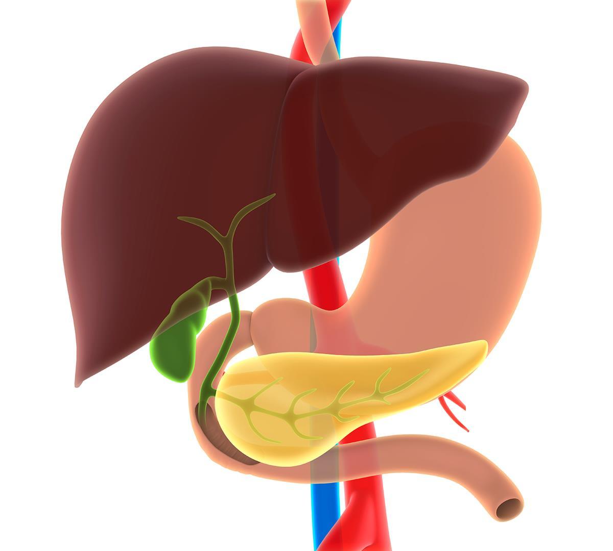 Čo odkrývajú ťažkosti s pankreasom a pečeňou